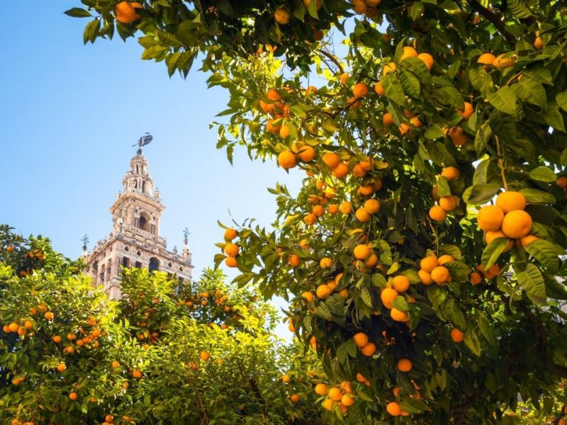 10 things to do in Seville