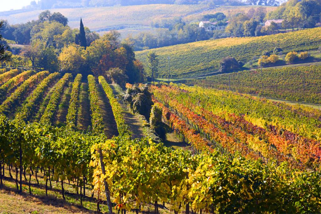 emilia romagna vineyards